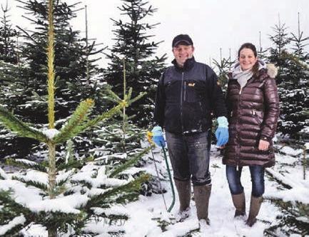Leidenschaft für Weihnachtsbäume
